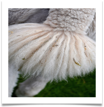 Alpacca fluffy tail - Gilli Bruce
