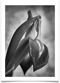 IRIS mono VERY HIGHLY COMMENDED - Des Hawley