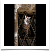 Jail_Break_Kitten- Wynford Evans